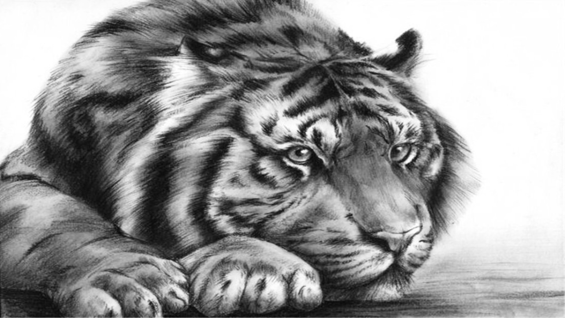 Простой карандаш. Тигр.